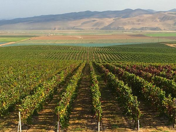 Garey Vineyard - Santa Barbara County
